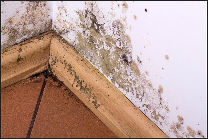 4 Reasons Why Calling One of the Mold Remediation Services Thornton CO Makes Sense